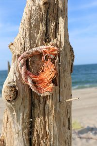 Drift wood and rope found on cape cod national seashore
